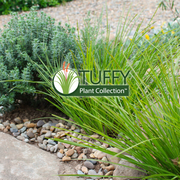 Tuffy Plant Collection